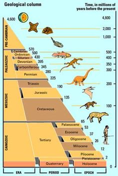 Geological Timeline