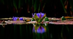 The Lily Pond by Ray Bilcliff on 500px