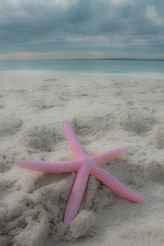 Items similar to Beach Photography Coastal photography Beach print Starfish print Landscape photography Seascape Beach house decor Pink & Blue on Etsy beauty beaches Photography Beach, Landscape Photography, Photography Tricks, Digital Photography, Creative Photography, Fashion Photography, Strand Hacks, Rauch Tapete, I Love The Beach