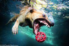 Dog under water