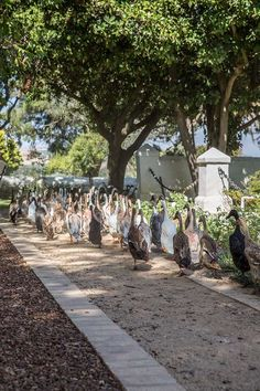 Duck parade at Vergenoegd Wine Estate, Stellenbosch Oh The Places You'll Go, Great Places, Wine Gift Baskets, Picnic Baskets, South African Wine, Cape Dutch, Wine Tasting Experience, Cape Town, Dolores Park
