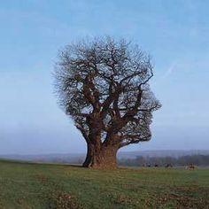 Spirituality - what a kool tree