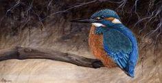 Kingfisher by Markelli (Marc Potts)