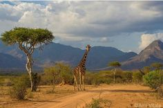 Sarara camp, North Kenya