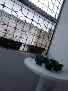 Mudas e flores do meu jardim