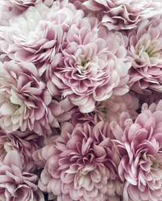 #blumen #blüten #blumenmeer #blossoms #flowers