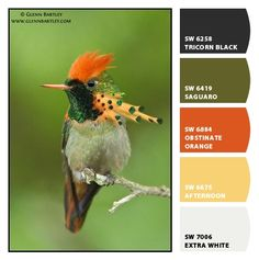 Tufted Coquette paint colors by Sherwin-Williams