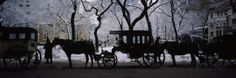 Silhouette of Horse Drawn Carriages, Chicago, Illinois, USA Photographic Print by Panoramic Images at AllPosters.com