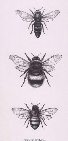 Kunst Tattoos, Tattoo Drawings, Leg Tattoos, Small Tattoos, Tatoos, Petit Tattoo, Tattoo Zeichnungen, Bee Art, Nature Illustration