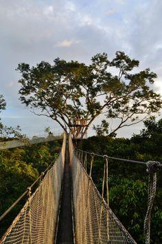 canopy walkway over the Amazon rainforest - Imgur