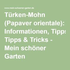 Türken-Mohn (Papaver orientale): Informationen, Tipps & Tricks - Mein schöner Garten Ficus, Papaver Orientale, Math Equations, Figs, Gardening, Nice Asses, Fig Tree, Fig, Ficus Tree