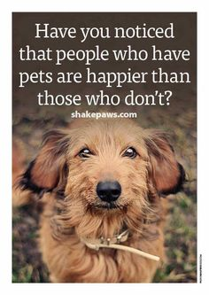 Because pets are the best kind of family, they love you unconditionally