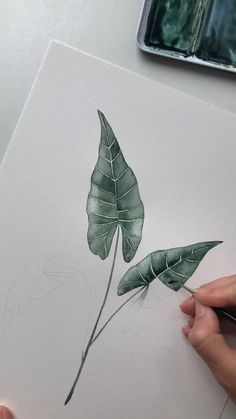 Alocasia watercolor painting by Skyla Design : Video time-lapse of green leaves watercolor painting by Skyla Design Music by R. Watercolor Paintings For Beginners, Watercolor Video, Watercolor Techniques, Abstract Watercolor, Watercolor Illustration, Simple Watercolor, Tattoo Watercolor, Watercolor Background, Watercolor Landscape