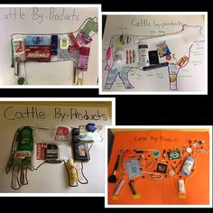 Agriculture education - These projects are looking awesome! Can't wait to see the rest of my students' work! Students had to create a poster with at least 15 items we get from cattle besides beef! Ag Science, Animal Science, Science Lessons, Science Activities, Classroom Activities, Agriculture Projects, Agriculture Quotes, Agriculture Business, Lunch Boxe