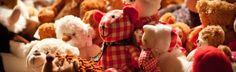 """Guest post en Foxize School: """"Lo que doy como profesora y lo que espero de mis alumnos"""". 13 de noviembre de 2012. Teddy Bear, School, Teachers, November, Teddy Bears"""