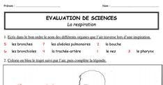 Bilan-la-respiration.pdf