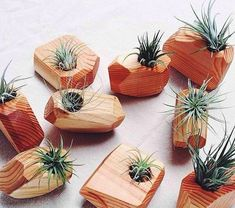 Succulent is a type of plants that doesn't need a lot of treatment. They can grow anywhere with minimum water, including the wood succulent planter. Here are 20 ideas of cute and vintage succulent planter. Air Plants, Indoor Plants, Indoor Gardening, Garden Plants, Wooden Planters, Wood Home Decor, Cactus Y Suculentas, Plant Holders, House In The Woods
