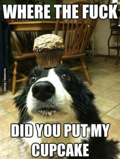 Owner Rebecca Johnson, from Pennsylvania, captured pictures of her Border Collie Zelda balancing everything from a tennis ball, cake, book and plate of food on her head. Funny Baby Pictures, Funny Pictures With Captions, Cute Pictures, Moving Pictures, Funny Images, Funny Photos, Funny Babies, Funny Dogs, Cute Dogs