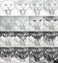 How to Draw A Realistic Tiger, honestly, I could only do the first row without it looking like a total mess