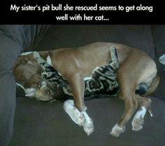 :) #pitbull