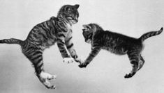 Cat Falling Learn how to stop your cats from spraying.