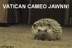 OMG, giggles out loud. Sherlock, Jawn, Vatican Cameos, Martin Freeman is a hedgehog. Animals And Pets, Baby Animals, Funny Animals, Cute Animals, Nocturnal Animals, Wild Animals, Sherlock Fandom, Sherlock Bbc, Johnlock