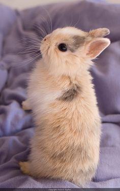 Baby rabbit just as cute as it can be. ♥