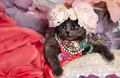 Гламурная кошка из Румынии приглянулась Интернет-пользователям | Wo&Men | TVNET
