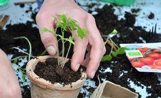 lær om omplantning Grow Your Own, Blog, Plant, Nature