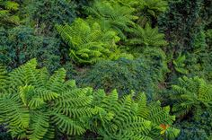 Ferns at Blue Mountains