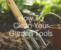 If your gardening tools look like they've been used as a prop for a zombie apocalypse movie, then it's definitely time to give them a good clean. Garden tools need to be cleaned to keep them in peak working order, to kill any bacteria and also prevent rust.
