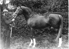 Crabbet Arabian Stud - Wikipedia, the free encyclopedia