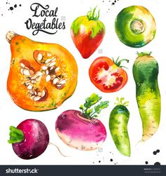 Watercolor Illustration With Farm Vegetables. Set Of Different Vegetables: Pumpkin, Turnips, Radishes, Radish, Tomato. Fresh Organic Food. - 511818715 : Shutterstock