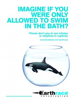 Please Dont Pay to See Whales or Dolphins in Captivity...
