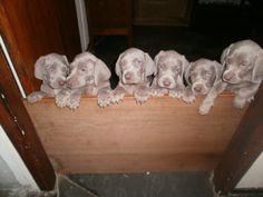 .Puppies!