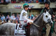 Creator before the Belmont Saratoga Horse Racing, American Pharoah, Horse Fly, Sport Of Kings, Equestrian Problems, Thoroughbred Horse, Racehorse, Show Horses, Horse Stuff