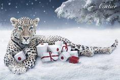 Cartier leopard!  Love,love,love:)))