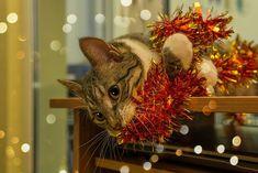 Как создать новогоднее настроение. Приближается главный праздник не только для страны, но и для всего мира.Иногда необходимо создать себе новогоднее настроение в преддверии праздников. Dog Breed Info, Pet News, Happy New Year Everyone, Online Pet Supplies, Find Pets, Christmas Cats, Dog Pictures, Dog Breeds, Dogs
