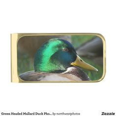 Green Headed Mallard Duck Photo Gold Finish Money Clip