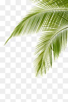 Tree Photoshop, Photoshop Images, Photoshop Elements, Studio Background Images, Background Images For Editing, Background Templates, Episode Backgrounds, Photo Backgrounds, Wallpaper Backgrounds