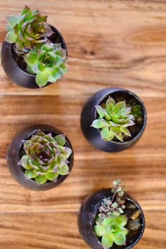 What you can do with these little succulents ... #DIY   reluctantentertainer.com