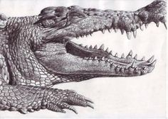 Drawn crocodile world's good - pin to your gallery. Explore what was found for the drawn crocodile world's good Realistic Animal Drawings, Colorful Drawings, Crocodile Tattoo, Life Drawing, Drawing Tips, Australian Animals, Animal Sketches, Animal Tattoos, Pet Birds