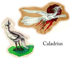 Caladrius, according to the Roman mythology, is a snow-white bird that lives in kings' houses. Supposedly, the bird refuses to look at any patient that is not going to make a full recovery. Caladrius existed in the Greek mythology under the name Dhalion.  It is said to also be able to take the sickness into itself and then fly away, dispersing the sickness and healing both itself and the sick person.