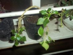Otra planta recuperada