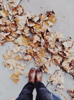 Autumn's crunchy and beautiful leaves.  Pinterest // @claireepabich