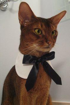 White round collar with black satin ribbon tie $24