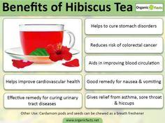 hibiscusteainfo-700x525