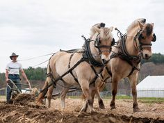 Farm Equipment That Runs on Oats By ANNE RAVER ... Stephen Leslie plowing a field at his farm in Vermont with Cassima, left, and Tristan, a pair of Norwegian Fjord draft horses. Go to: www.nytimes.com