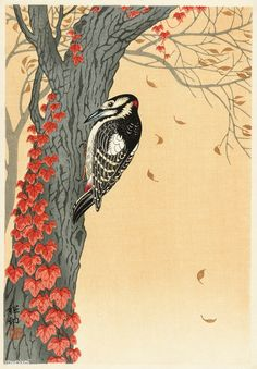 Great Spotted Woodpecker On Tree With Red Ivy by Ohara Koson Japanese Woodblock in Art, Art Prints Japanese Prints, Japanese Art, Japanese Painting, Image Fun, Free Image, Ohara Koson, Spotted Woodpecker, Snowy Trees, Blossom Trees