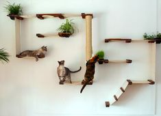 Cat Furniture now available for purchase at A1Savannahs, The Original Founder of the Savannah Cat Breed.